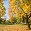 Stock Photo: Beautiful autumn scenery