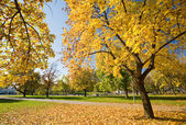 Beautiful autumn scenery — Stock Photo