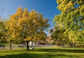 Crazy autumn colors. — Stock Photo