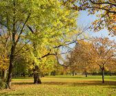 Beautiful colorful autumn scenery — Stock Photo