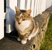 Cute rural kitten. — Stock Photo