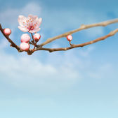 Vackra våren compostiton. — Stockfoto