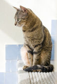 Cute young tabby cat relaxing. — Stock Photo