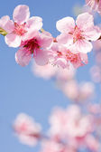 Beautiful spring flowers with clear blue sky. — Stock Photo