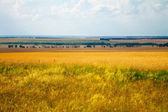 Green grass meadows and fields landscape — Stock Photo
