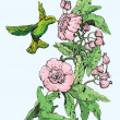 Colibri and flowers. — 图库矢量图片