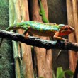 Stock Photo: Chameleon