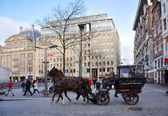 A carriage horse on Amsterdam Dam square — Stock Photo