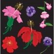 Set of Flowers bloom - hibiscus, violet, convolvulus — Image vectorielle