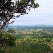 Stock Photo: Mountain view with pine. Majorcisland in Balearic Spain
