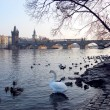 Old town of Prague, Czech Republic. View on Vltava river with ducks and swa — Stock Photo