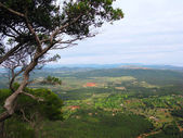Mountain view with pine. Majorca island in Balearic Spain — Stock Photo