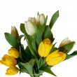 Bouquet of yellow and white tulip flowers isolated on white background — Stock fotografie