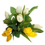 buquê de flores de tulipa amarela e branca, isolado no fundo branco — Foto Stock