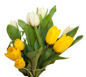 Bouquet of yellow and white tulip flowers isolated on white background — Stock Photo