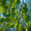 Green twigs - Stock Photo