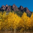 Stock Photo: Aspens in Fall