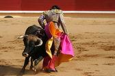 Matador and Bull in Ring — Stock Photo