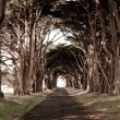 Stock Photo: Tunnel like row af trees