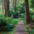 Stock Photo: Wooden hiking trail in redwood forest