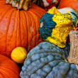 Stock Photo: Pumpkin and squash