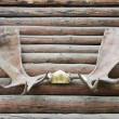 Stock Photo: Antlers