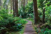 Wooden hiking trail in redwood forest — Stock Photo