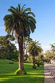 Palmami wzdłuż ulicy — Zdjęcie stockowe