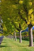 Hermosa caída de árboles de color — Foto de Stock
