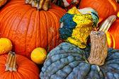Pumpkin and squash — Stock Photo