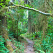 Hoh Rain Forest — Stock Photo