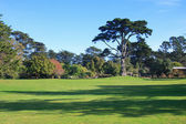 Golden Gate Park — Stock Photo
