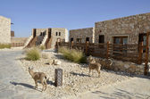 Tourist cottages in Negev desert, Israel. — Stock Photo