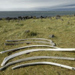 Whale remains at Snaefellsnes coast, Iceland — Stock Photo #10536209