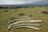 Whale remains at Snaefellsnes coast, Iceland — Stock Photo
