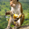 Monkey with banana in Sri Lanka — Stock Photo
