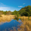 Stock Photo: Coastal marsh