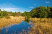 Coastal marsh — Stock Photo