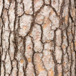 Pine Tree Trunk Bark — Stock Photo