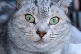 Head of a cat — Stock Photo