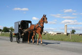 Amish Horse and Carriage — Stock Photo