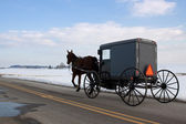 Amish Carriage — Stock Photo