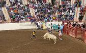 Genç bull rider — Stok fotoğraf