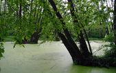 Lac dans un bois vert et les arbres — Photo
