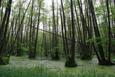 Bog in a wood — Stock Photo