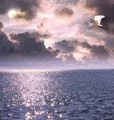 Beautiful white egret flying over the ocean — Stockfoto