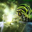 Caterpillar Magic - Stock Photo