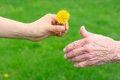 Dar uma flor a senior — Foto Stock