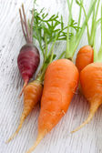 Organic garden carrots — Stock Photo