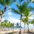 Tropical beach with palm trees — Stock Photo #8380176
